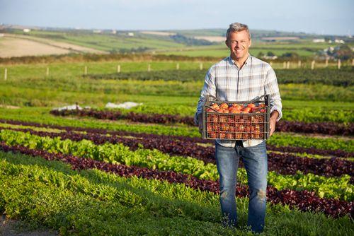 Бизнес-хак. Как небольшому фермерскому хозяйству наладить сбыт продукции